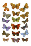 British Butterflies  1897