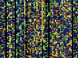 Computer Screen Showing a Human Genetic Sequence