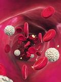 Blood Cells In Blood Vessel  Artwork
