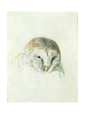 White Barn Owl  from the Farnley Book of Birds  C1816