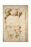 Anatomic Horse Study  1504