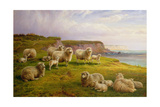 Sheep on a Dorset Coast