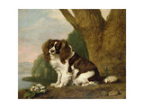 Fanny  a Brown and White Spaniel  1778