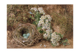May Blossom and a Hedge Sparrow's Nest  1845
