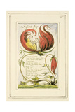 Infant Joy: Plate 25 from Songs of Innocence and of Experience C1802-08