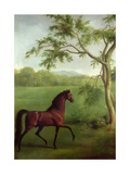 An Arabian Stallion Beneath a Tree  C1761-63