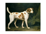 Portrait of a Hound Belonging to William Pitt  1st Earl of Chatham  1788