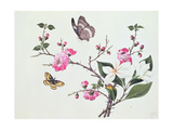 Japonica  Magnolia and Butterflies
