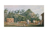 T1231 a View of the Village at Pitcairn Island  December 1825