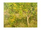 The Lemon Tree  1893