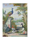 Exotic Birds and Domestic Fowl in a Picturesque Park  Early 18th Century