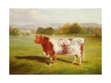 Portrait of a Shorthorn  19th Century