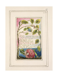 The Sick Rose: Plate 40 from 'Songs of Innocence and of Experience' C1802-08