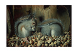 The Gluttons (Squirrels)