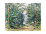 T1229 the Blue Mountains  Jamaica  1879