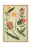 Pd109-1973F41 Flower Studies