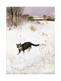 Cat Stalking over Snow  1884