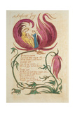 Infant Joy  from Songs of Innocence  Published 1789