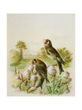 Goldfinches on Thistles  1889