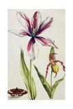 Orchid  Tulip and Butterfly  C1675