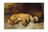 A Dandie Dinmont  1884
