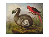 Dodo and Red Parakeet  C1773