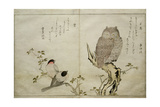 P332-1946 Vol2 F4 an Owl and Two Eastern Bullfinches  from an Album 'Birds Compared in…