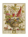 December  from 'twelve Months of Flowers' by Robert Furber (C1674-1756) Engraved by Henry Fletcher