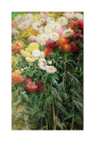 Clump of Chrysanthemums  Garden at Petit Gennevilliers  1893