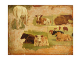 Study of Cows  C1860