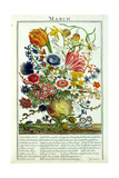 March  from 'The Flower Garden Displayed' by Robert Furber (C1674-1756)  Engraved by James…
