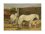 Gypsy Horses  C1885-90