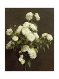 White Roses  1870