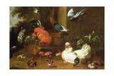 Poultry in Parkland