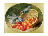 Bluetits Pecking at Cherries  1897