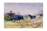 T952 John Sawing's Narrow Escape from Being Run Down by a Couple of Rhinoceros  North of the…