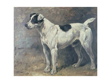 A Jack Russell  1891