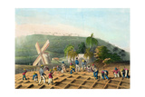 Planting the Sugar-Cane  Pub by Infant School Society Depository  London  C1820