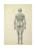 The Human Figure  Anterior View  from the Series 'A Comparative Anatomical Exposition of the…