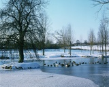 Ducks in the Snow Near Finchingfield  Essex