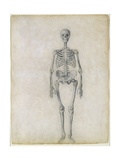 The Human Skeleton  Anterior View  from the Series 'A Comparative Anatomical Exposition of the…