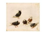 Pigeons  1888
