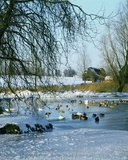 Duck Pond in Winter Near Finchingfield  Essex