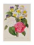 Camellias  Narcissus and Pansies  Engraved by Victor  Pub 1827