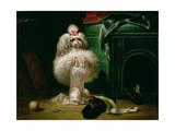 A Dog of the Havannah Breed  1768