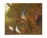 An Assembly of Birds in a Classical Park  1719
