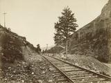 Thousandth Mile Tree  Near Echo Canyon  Utah  Usa C1895-1905