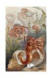 """Hermit Crabs  Plate from """"Brehms Tierleben: Allgemeine Kunde Des Tierreichs""""  Vol10  P38 …"""