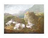 Ptarmigan in a Mountainous Landscape with Sportsmen and Dogs Beyond