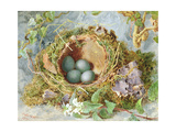 A Nest of Eggs  1871